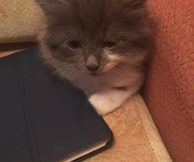 Отдам котёнка. Фото 3.