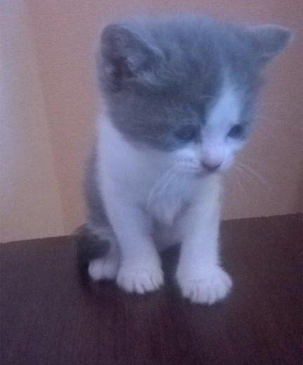 Котята в дар. Фото 4. Москва.