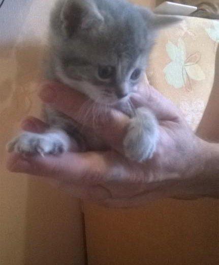 Котята в дар. Фото 3. Москва.
