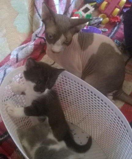 Котята в дар. Фото 1. Москва.