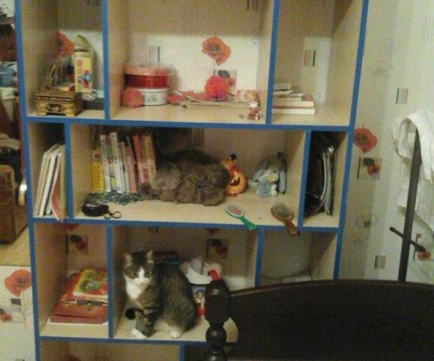 Полка для книг. Фото 1. Отрадное.