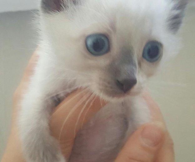 Котёнок. Фото 2. Тюмень.