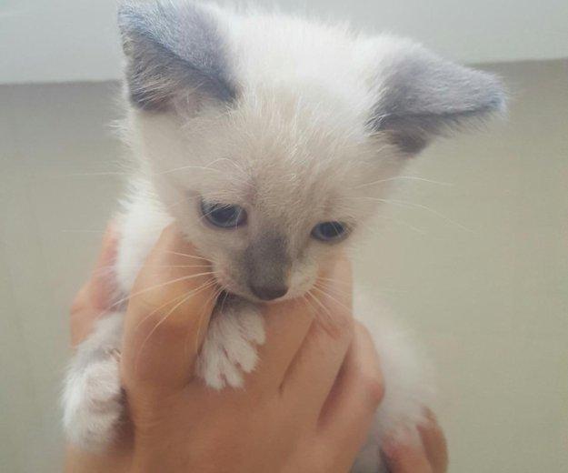 Котёнок. Фото 3. Тюмень.