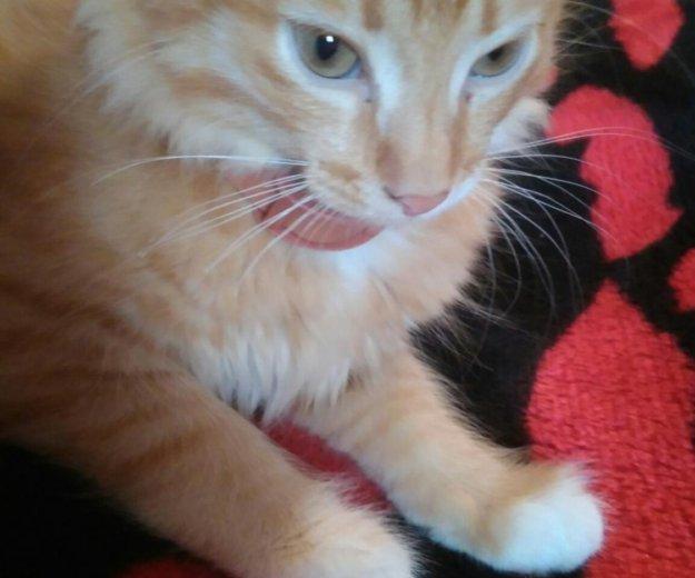 Котёнок. Фото 2. Красноярск.