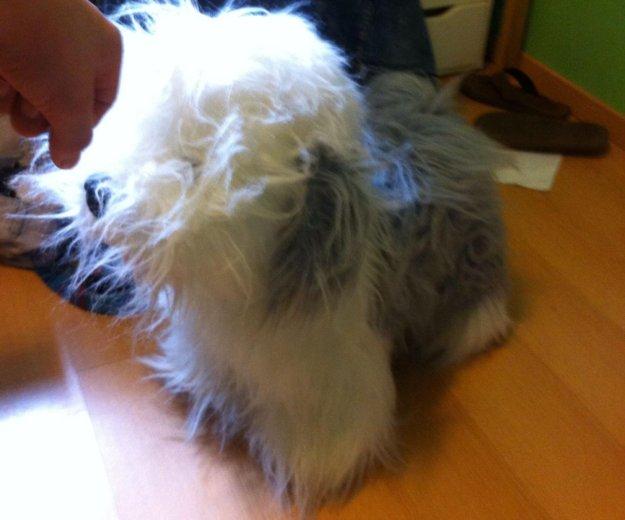 Плюшевая  игрушка собака. Фото 1. Москва.