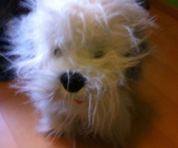Плюшевая  игрушка собака. Фото 3. Москва.