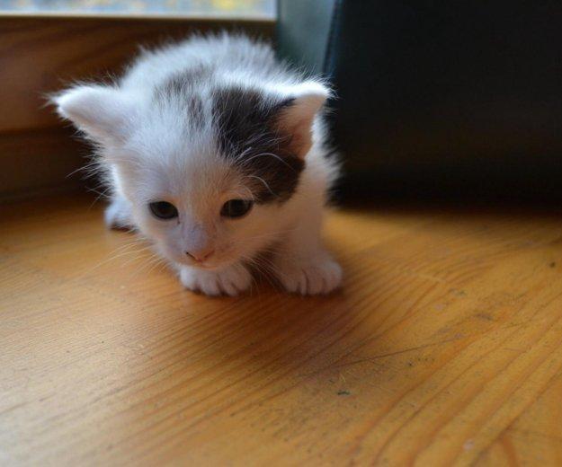 Котята. Фото 3. Иваново.