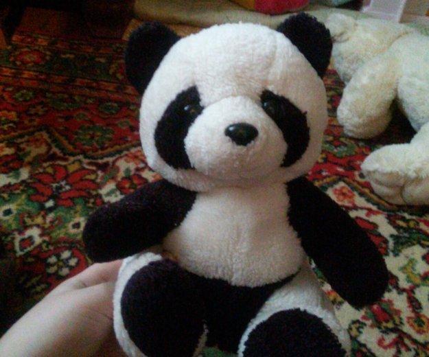 Панда. Фото 1. Бронницы.