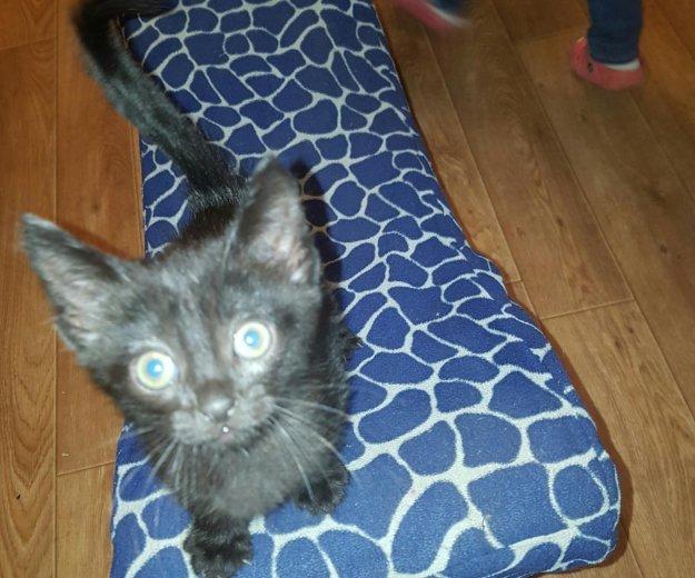 Котёнок в дар. Фото 2. Лобня.