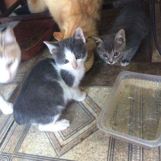 Котята ищут доброго хозяина. Фото 1. Самара.
