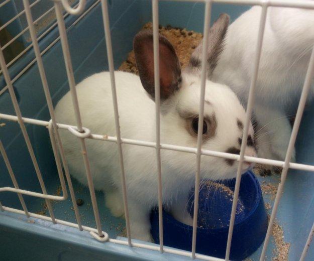 Декоративные кролики. Фото 1. Оренбург.