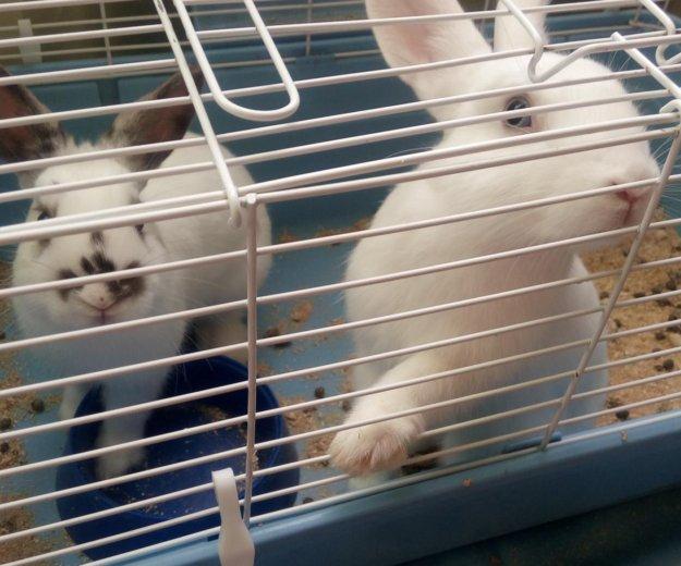 Декоративные кролики. Фото 2. Оренбург.