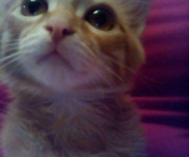 Котик , найден в подъезде !. Фото 2. Красноярск.
