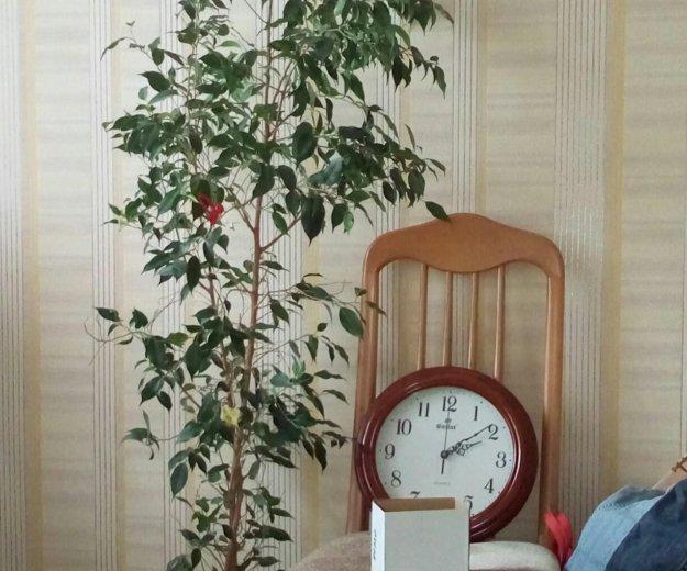 Цветы. Фото 1. Волгодонск.