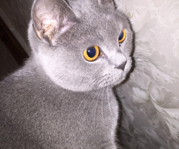 Отдам котика в добрые руки. Фото 4.