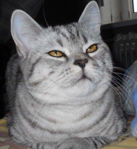 Котик вязка. Фото 1. Азов.