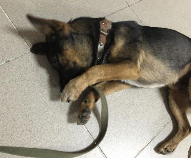 Собака (кабель). Фото 2. Михайловск.