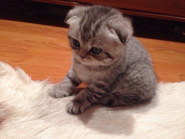 Котик вязка. Фото 4. Азов.