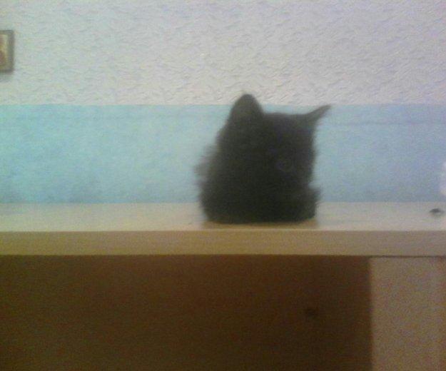 Котёнок. Фото 1. Ульяновск.