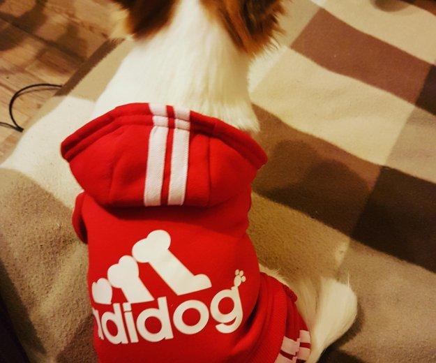 Комбинезон для собаки. одежда для собак. Фото 1.