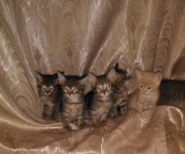 Котята. Фото 1. Белгород.