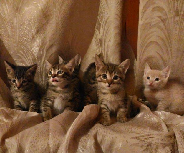 Котята. Фото 2. Белгород.