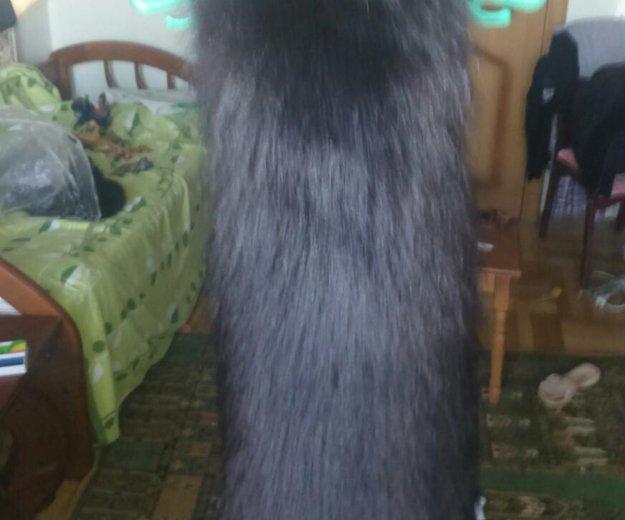 Цельная шкура енота. Фото 1. Краснодар.