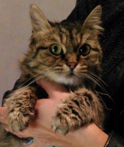 Миниатюрная ласковая кошка. Фото 1.