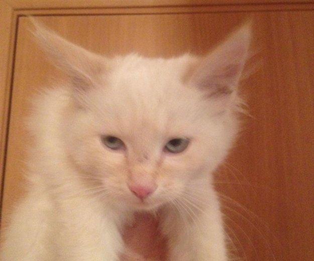 Котёнок в добрые руки. Фото 2. Волгоград.