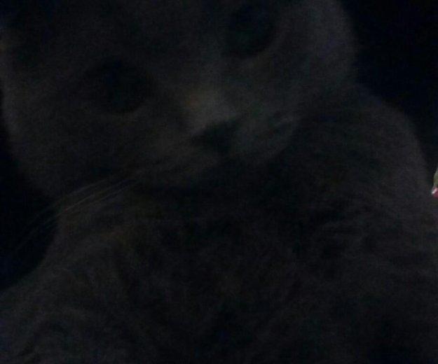 Кот для вязки. Фото 1. Владикавказ.