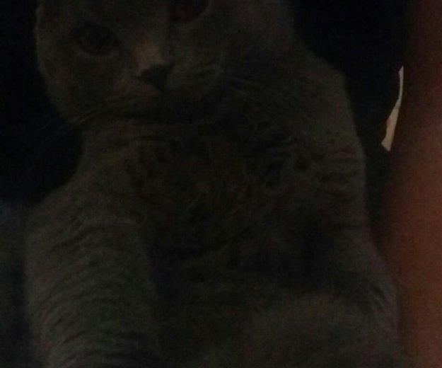 Кот для вязки. Фото 2. Владикавказ.