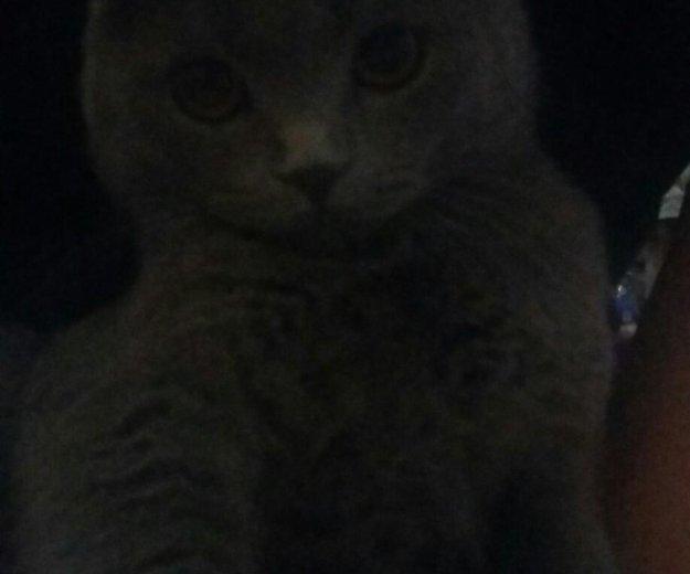 Кот для вязки. Фото 3. Владикавказ.