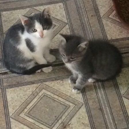 Котята ищут доброго хозяина. Фото 2. Самара.