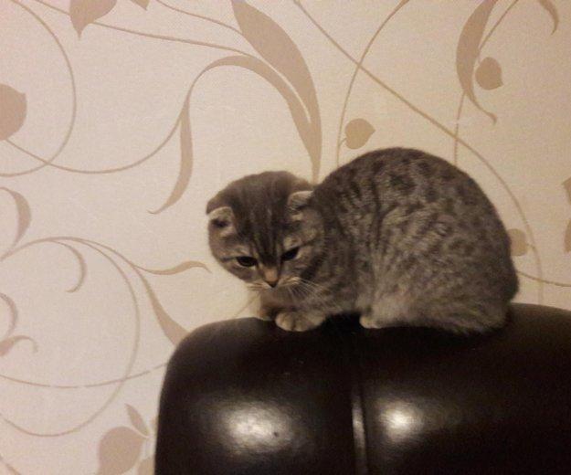 Жду котика. Фото 1. Иркутск.