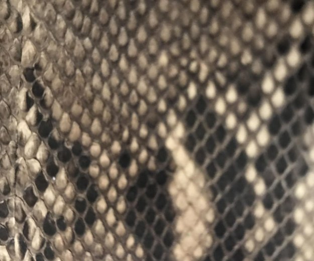 Кошелёк из кожи змеи. Фото 3. Хабаровск.
