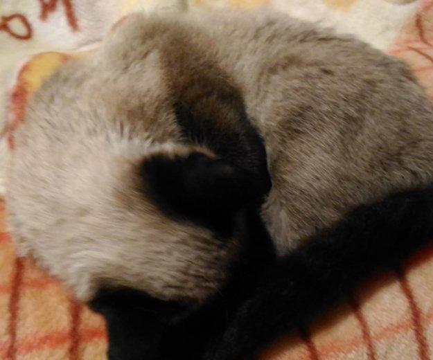 Нашелся кот. Фото 1. Ленинск-Кузнецкий.