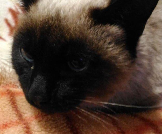 Нашелся кот. Фото 3. Ленинск-Кузнецкий.