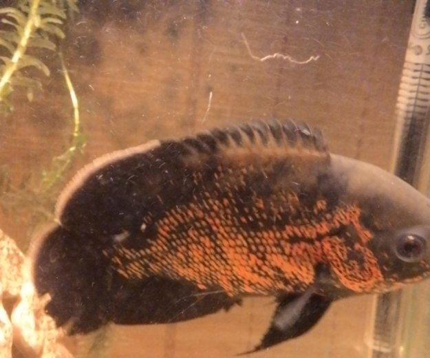 Рыбки. Фото 2.