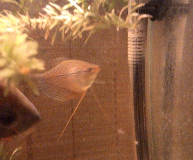 Рыбки. Фото 3.