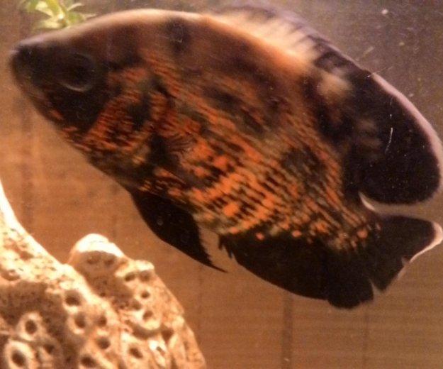 Рыбки. Фото 4.