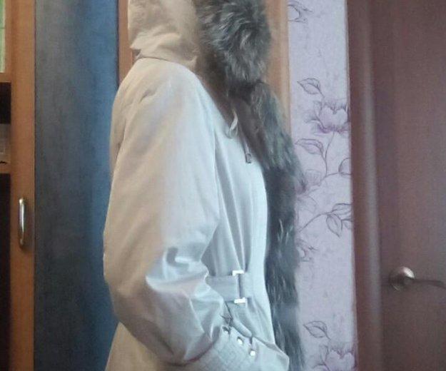 Пехор зимний. Фото 3. Ачинск.