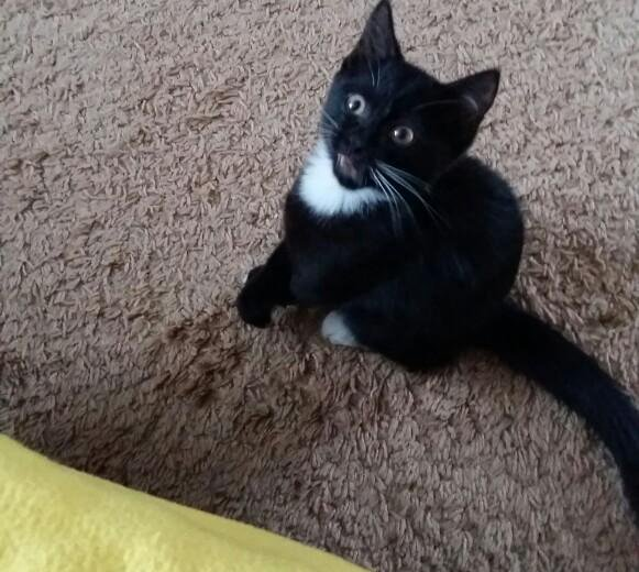 Отдам котика. Фото 2.