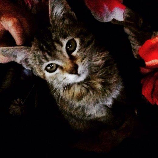 Котёнок. Фото 1. Волжский.