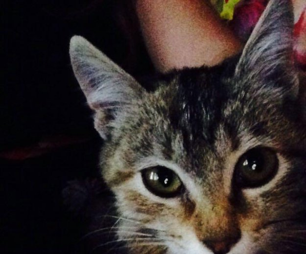 Котёнок. Фото 2. Волжский.