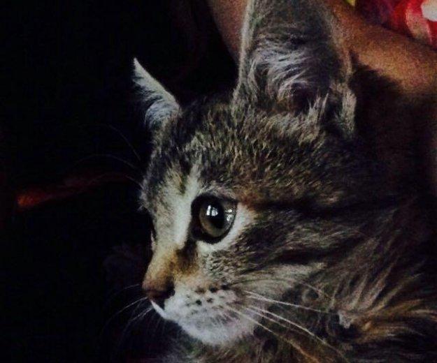 Котёнок. Фото 3. Волжский.