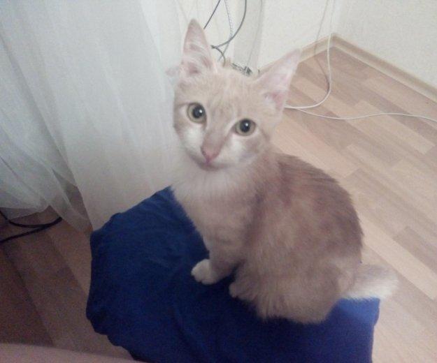 Рыженький котенок. Фото 1. Кемерово.