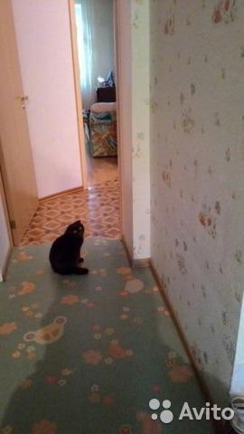 Квартира 3х комнатная. Фото 1. Тольятти.