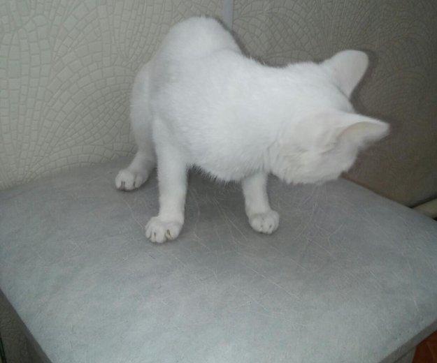 Котёнок. Фото 1. Заиграево.