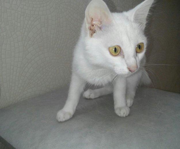 Котёнок. Фото 3. Заиграево.