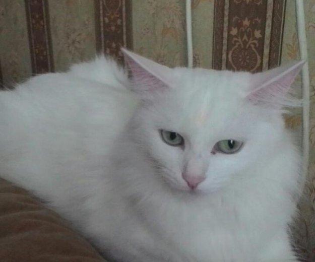 Кошка. Фото 1. Челябинск.